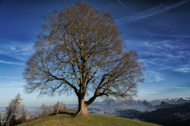 tree-1358456_1920